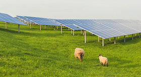 Two sheep on a meadow with solar panels.