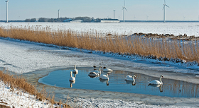 Swans on frozen canal and snow-covered field with wind turbines in the background.